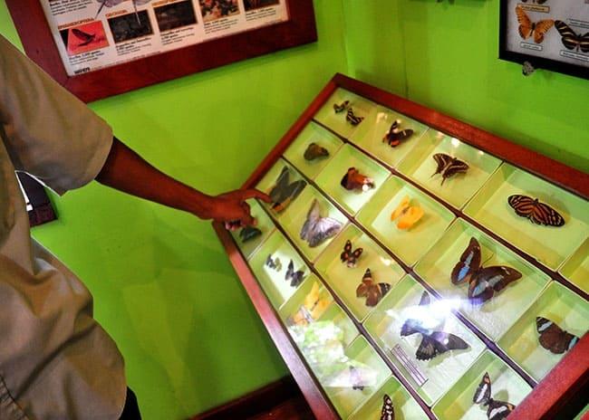butterfly museum belize