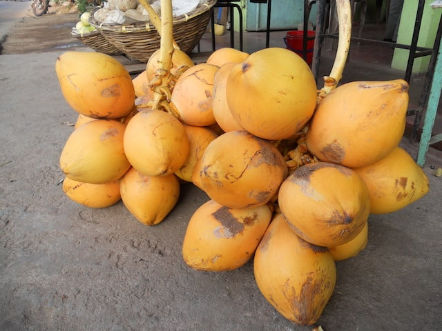 yellow coconuts in belize
