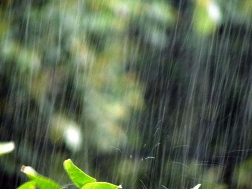 梅雨頭痛気圧