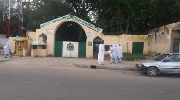 Gorilla Allegedly Swallows Nearly N7m at Kano Zoo?