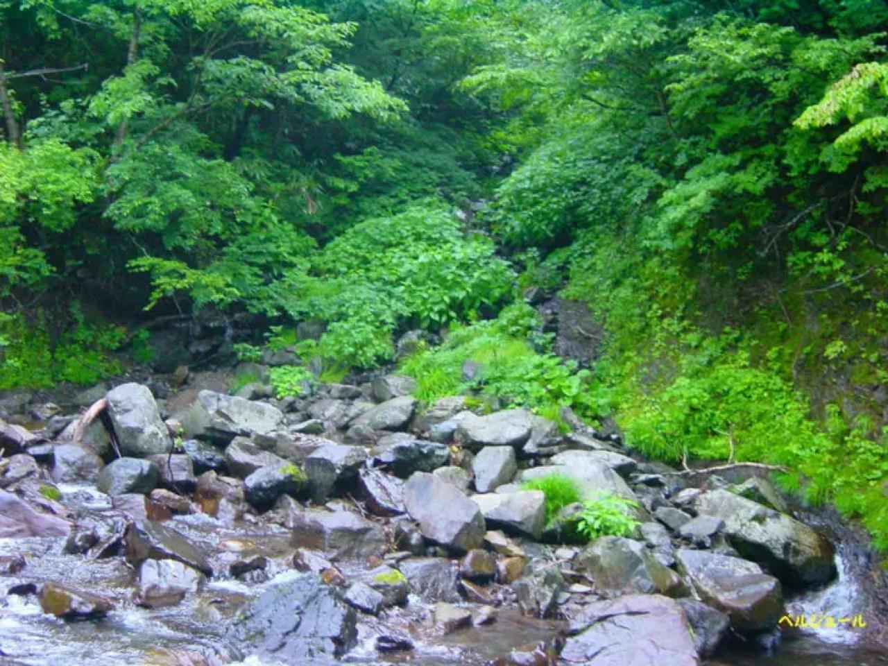 tokuyama00013 - 揖斐川上流・旧徳山村での岩魚釣り