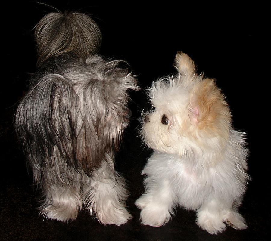 Our long coat Mi-Kis Winnie and Delysia