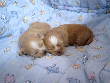 Buttercup's puppies