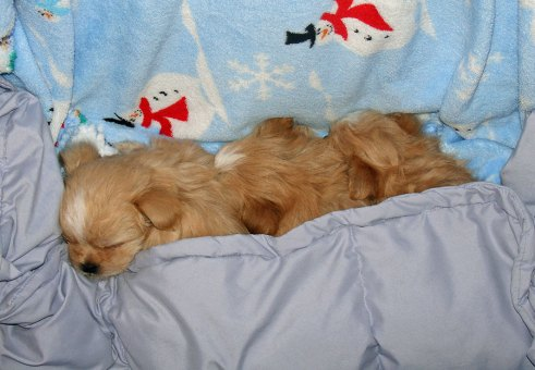 Buttercup's sleeping trio at 5 weeks