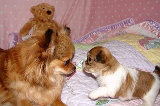 Cinnamon & Chloe