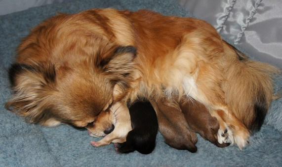 Cinnamon and her puppies
