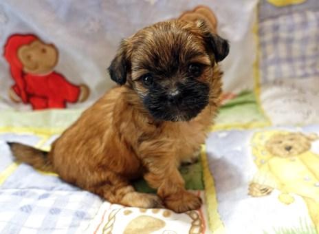 Sophie 4 weeks