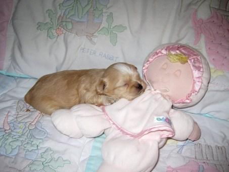 Peaceful slumber
