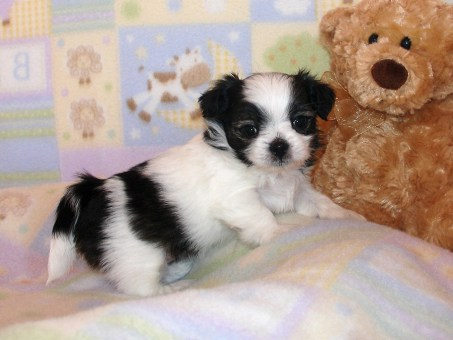 Pippen at 4 weeks