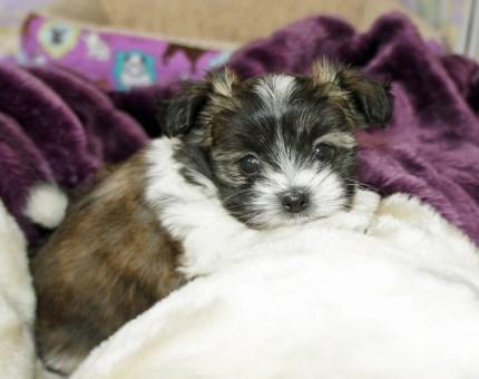 Jax at 6 weeks
