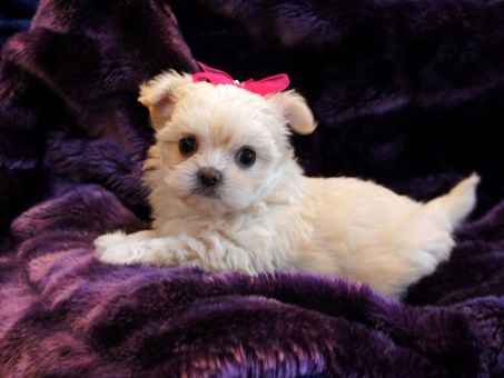 Keiko at 6 weeks