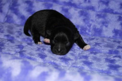 Newborn Winnie