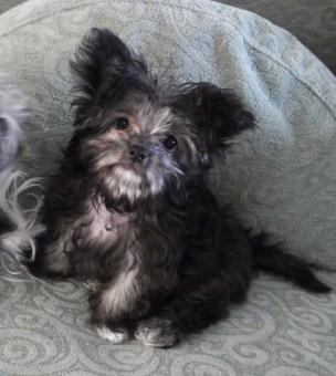 Winnie at 3 months