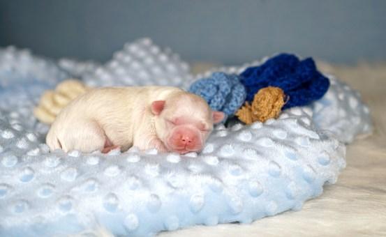 Twizzle Newborn