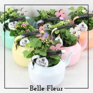 Belle Fleur Bloemen en Planten Zwolle