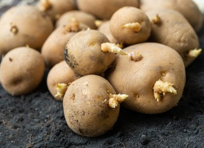 Potatoes Aren't Bad for People with Type 2 Diabetes, Says Study