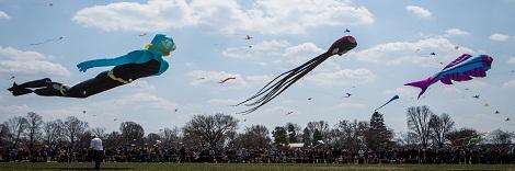 Kite-Festival-Detailed-Eckert