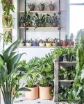 5 Plant and Garden Stores in Washington, DC