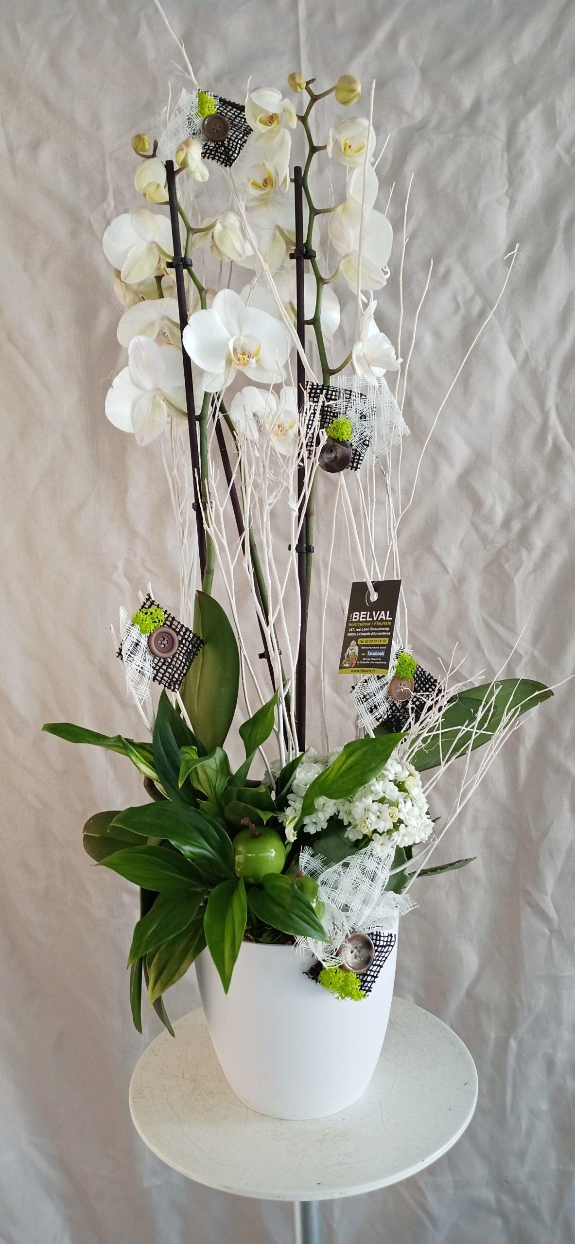 Composition Orchidée CAMILLE