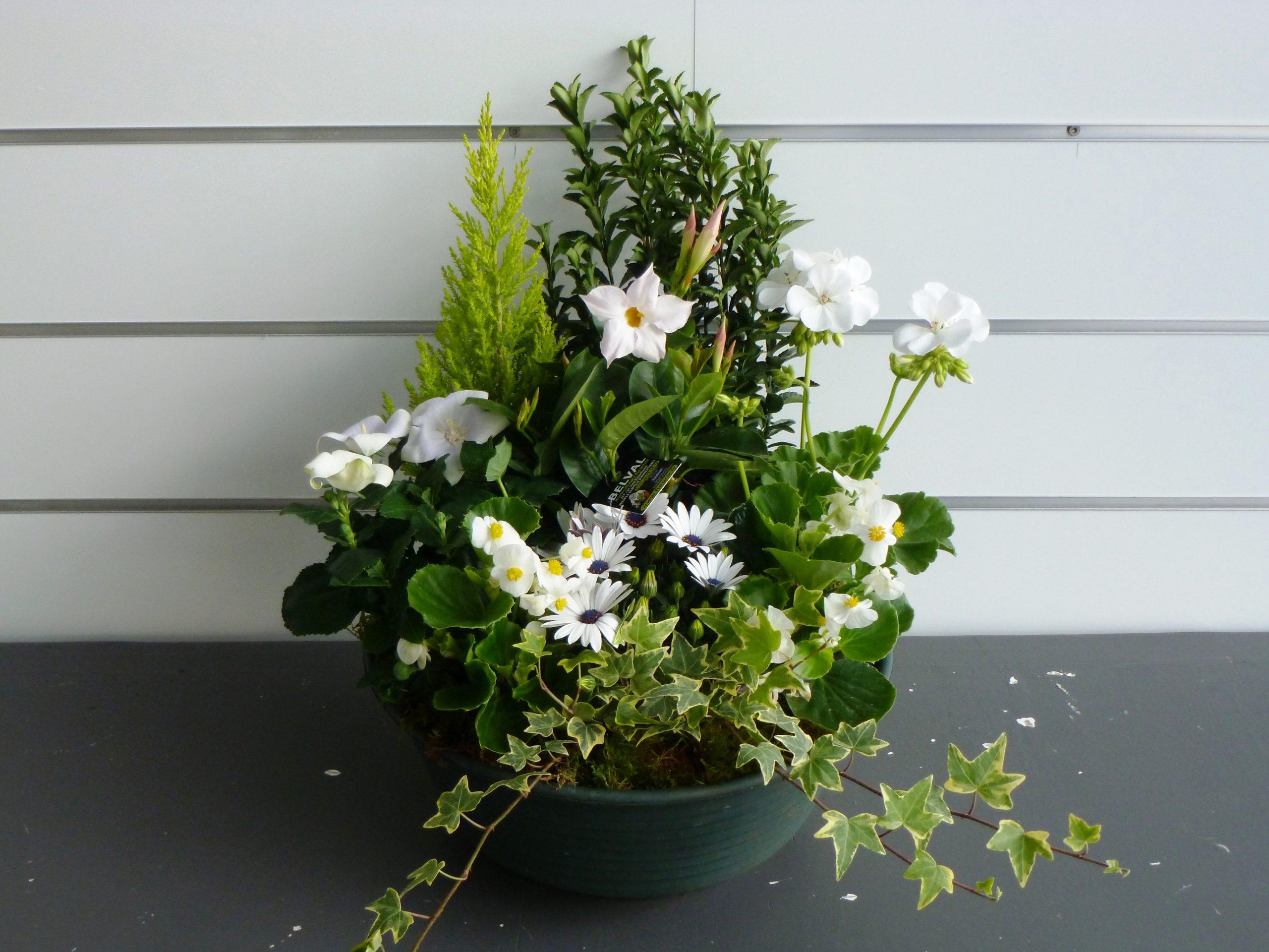 Coupe de plantes Blanche MILA