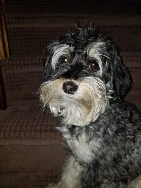 Lulu Listens Photo of Lulu by Belynda Wilson Thomas