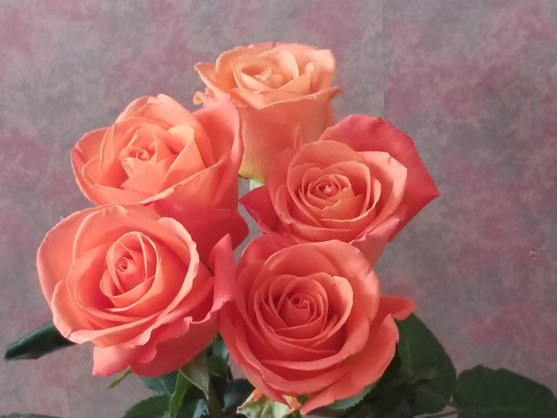 Choose love - Photo of five coral roses photo by Belynda Wilson Thomas