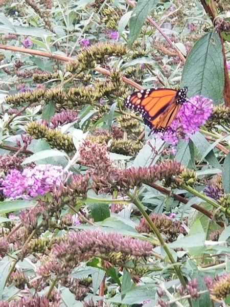 Tell Your Stories - Photo of Butterfly by Belynda Wilson Thomas