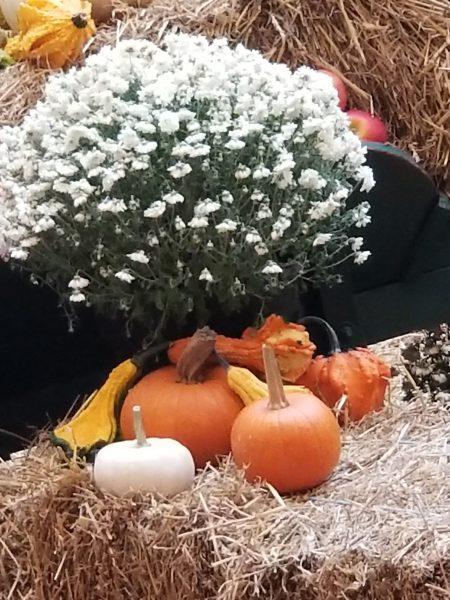 Thanksgiving - photo taken by Belynda Wilson Thomas