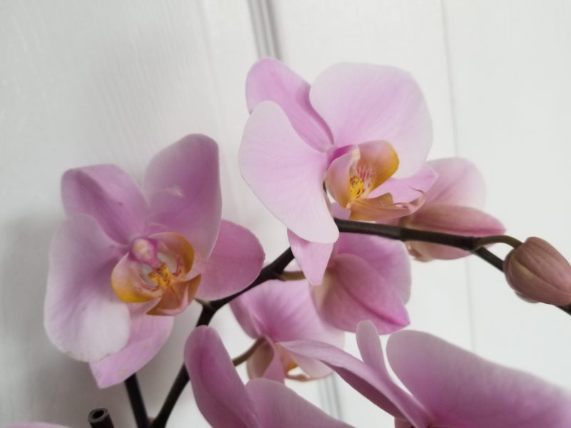 Being Enough - photo of Daniela's orchid by Belynda Wilson Thomas