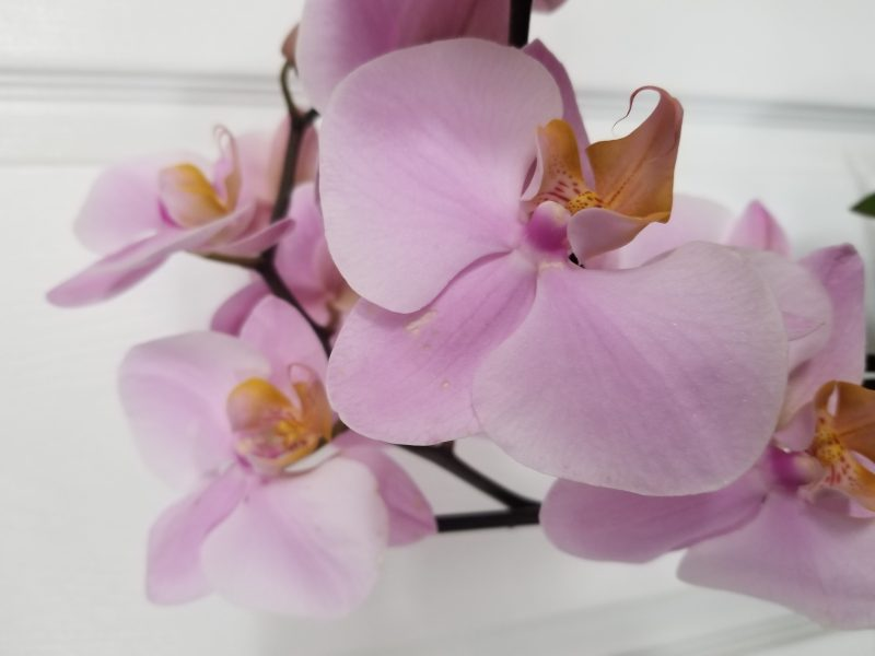 Life and Growing - photo of Daniela's orchid by Belynda Wilson Thomas