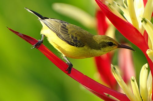 Stock photo of bird on flower.