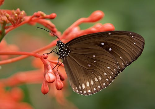 Stock photo of butterfly on orange flower.