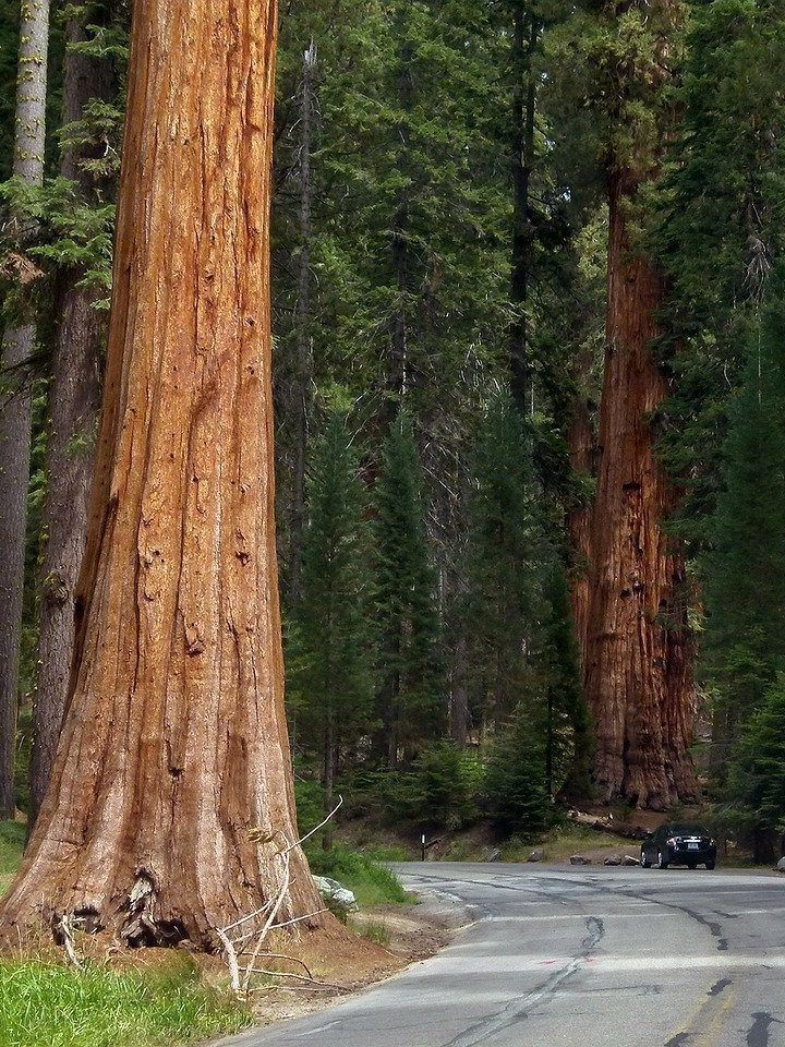 The Perfect 10-Stop Northern California Road Trip