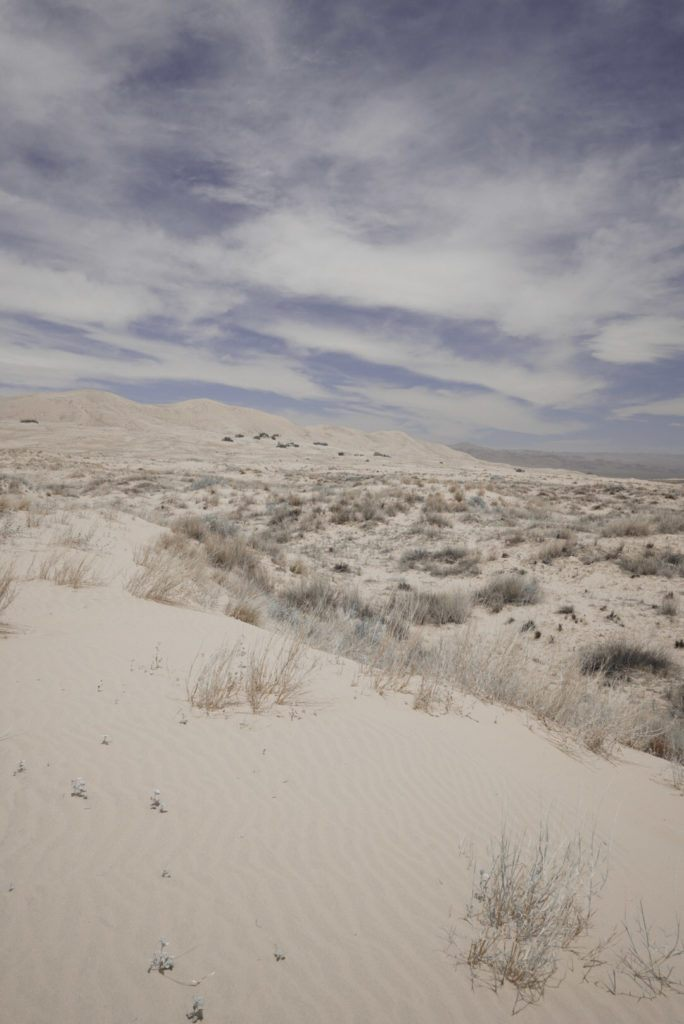 The sand and brush at Kelso Dunes.