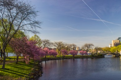 Charles River in the spring in Boston