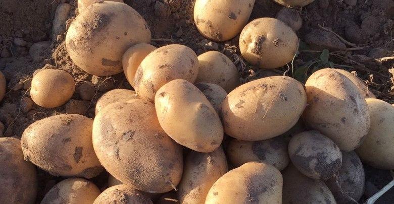Photo of Ya no se arrancará más patata en Castilla y León