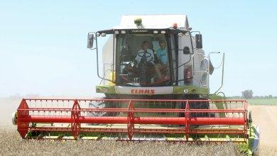 Photo of La cosecha de cereal será la segunda mayor cosecha de los últimos cinco años