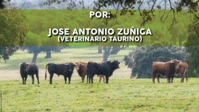 Photo of Charla-coloquio «Actuales Encastes del Toro de Lidia» en Benavente