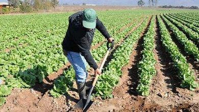 Photo of UCCL insiste en la necesidad de aumentar la inversión pública en agricultura y ganadería a nivel estatal y europeo