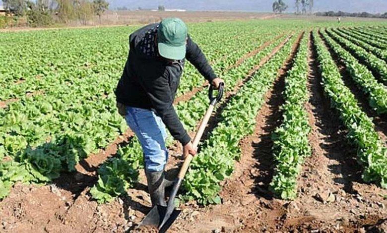 Photo of La UCCL expresa que los agricultores podrán continuar con su actividad agraria