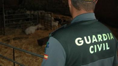 Photo of Investigado por el robo de corderos que fueron sacrificados en un matadero de la provincia