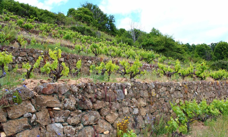 Photo of Castilla y León afianza su liderazgo en enoturismo con más de medio millón de visitantes a las ocho Rutas del Vino