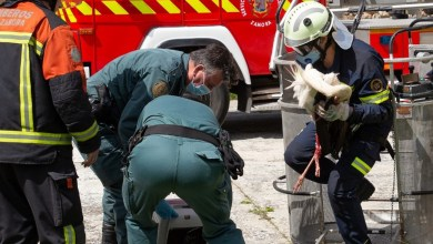 Photo of La Guardia Civil y Bomberos de Zamora, recuperan una cigüeña herida atrapada en una veleta