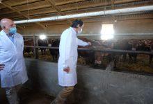 Photo of Fernández Mañueco garantiza que la Junta defenderá el mantenimiento de las ayudas al vacuno de carne en la negociación de la PAC