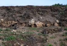 Photo of Los perjudicados por los daños que causa el conejo proponen más desbroces y caza como remedio