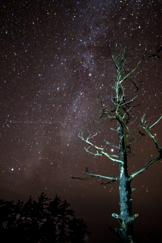 ecola tree, ecola state park, oregon coast, stars, milky way