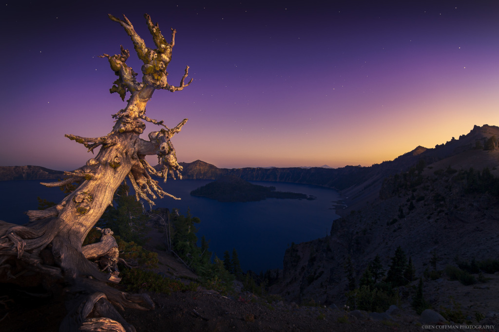 A whitebark pine at Crater Lake at twilight