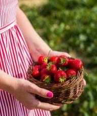 Benedek Gyümölcsfarm fotózás (1)