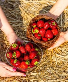 Benedek Gyümölcsfarm fotózás (13)