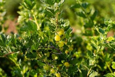 Benedek Gyümölcsfarm fotózás (14)